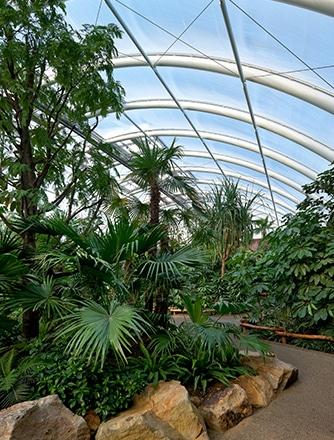 Pflanzenwachstum durch hohe Lichtdurchlässigkeit.